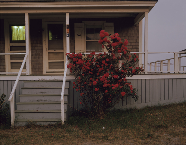, 'Roses, Provincetown, Massachusetts,' 1977, Howard Greenberg Gallery