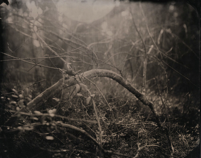 , 'In the Brambles,' 2012, GALLERY 1/1