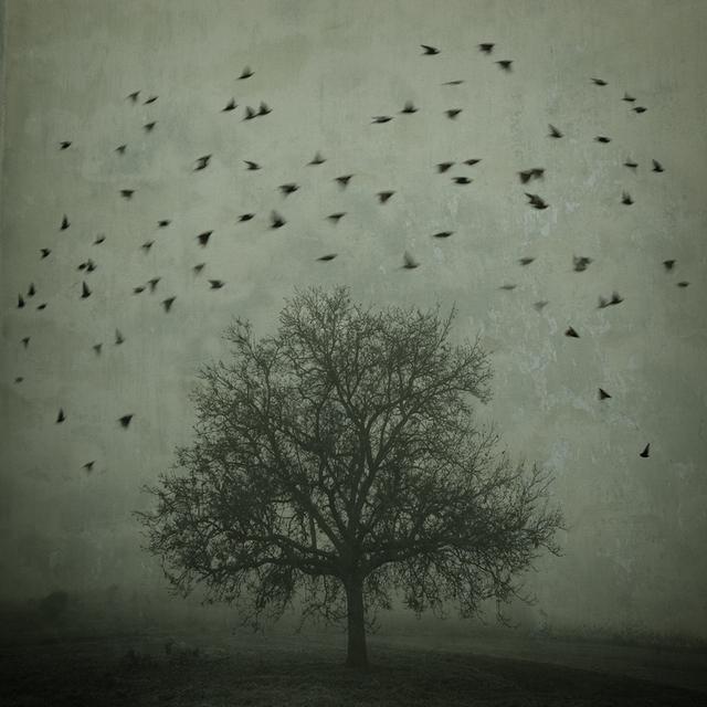 , 'Mirando al Cielo 1,' , Crane Kalman Brighton