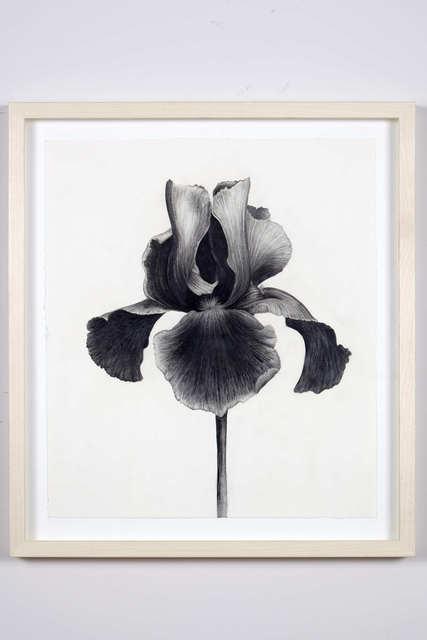 , 'Untitled (Black Iris),' 2014, Dio Horia