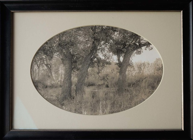 , 'Three Oak Trees, Ghost Ranch, New Mexico,' , Etherton Gallery