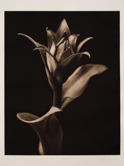 , 'Hosta,' 1998, Vision Neil Folberg Gallery