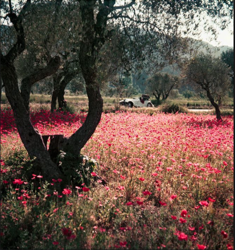 , 'Florette in the Morgan, Provence, May ,' 1954, ElliottHalls