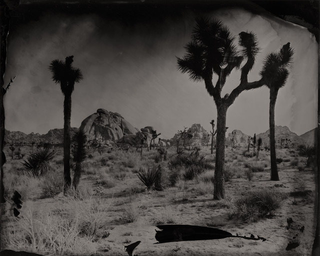 , 'Joshua Tree with Rock Formations,' 2016, Modern West Fine Art