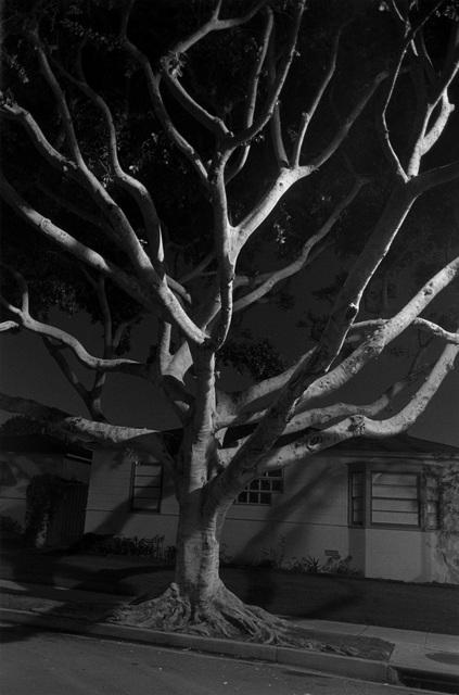 , 'Night Walk No. 55,' 1998, Pace/MacGill Gallery