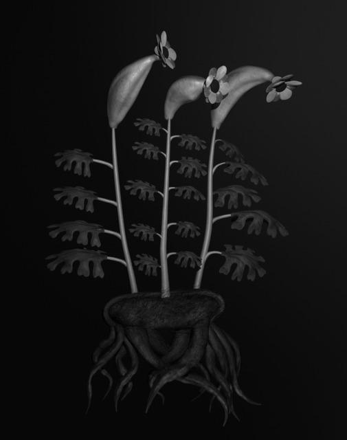 , 'Voynich Botanical Studies, Specimen #55r Leto,' 2013, Andersen's