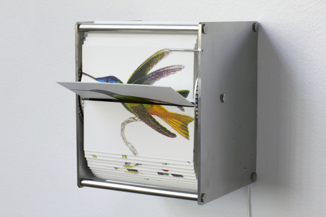 , 'Ornithology I,' 2015, Peana Projects