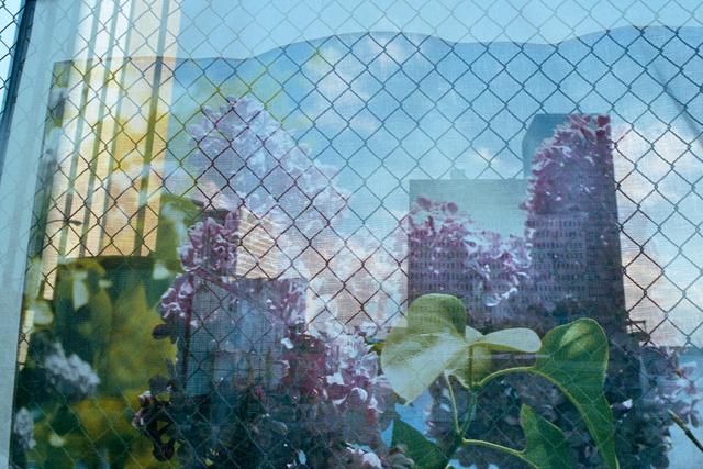 , 'Lilac Festival Scrim, Rochester, New York,' 2013, Robert Klein Gallery