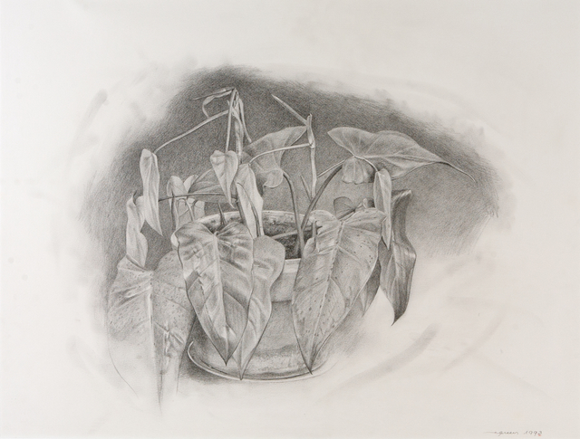 , 'Plant,' 1993, Dowling Walsh