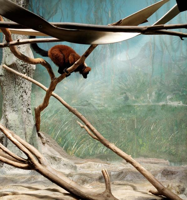 , 'Lemur and Painted Landscape,' , Galerie Dumonteil