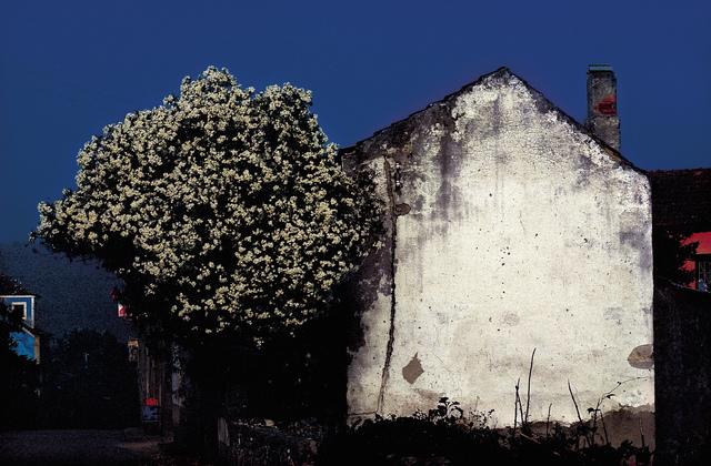 , 'Tree and Wall,' 1979, Da Xiang Art Space