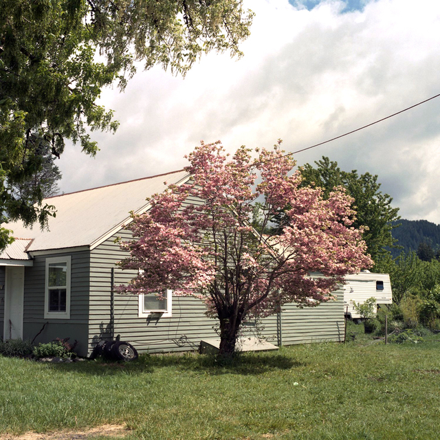 , 'Cherry Blossom Tree, Washington,' 2018, Flatland Gallery