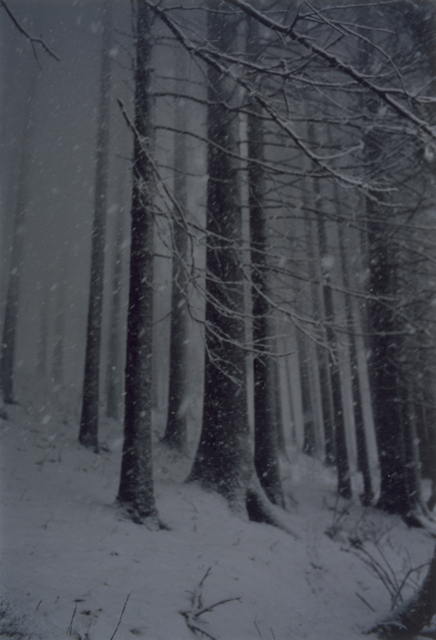 , 'Forest #2, Untitled (Snow Storm),' 2000, Yancey Richardson Gallery