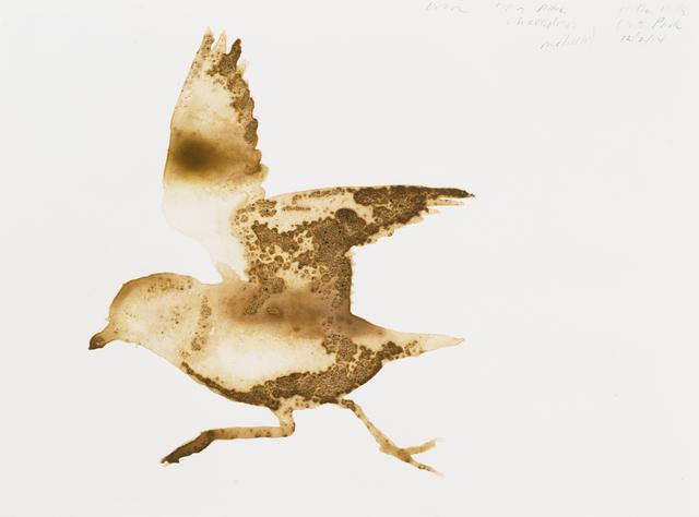 , 'Piping Plover (Charadrius melodus),' 2014, Parrish Art Museum
