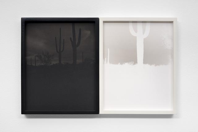 , 'Saguaro Forest, Sauceda Mountains, Arizona,' 2017, EUQINOM Gallery