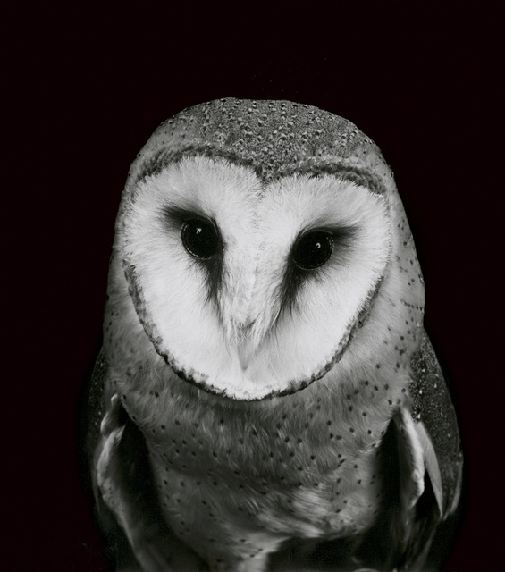, 'Owl,' 2000, Galerie Peter Sillem