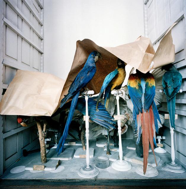 , 'Booth's Bird Museum,' , Clark Gallery