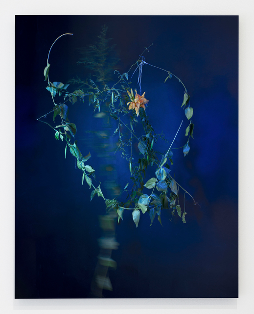 , 'Cynanchum louiseae et Hemerocallis (black swallow-wort and daylily),' 2017, Grant Wahlquist Gallery