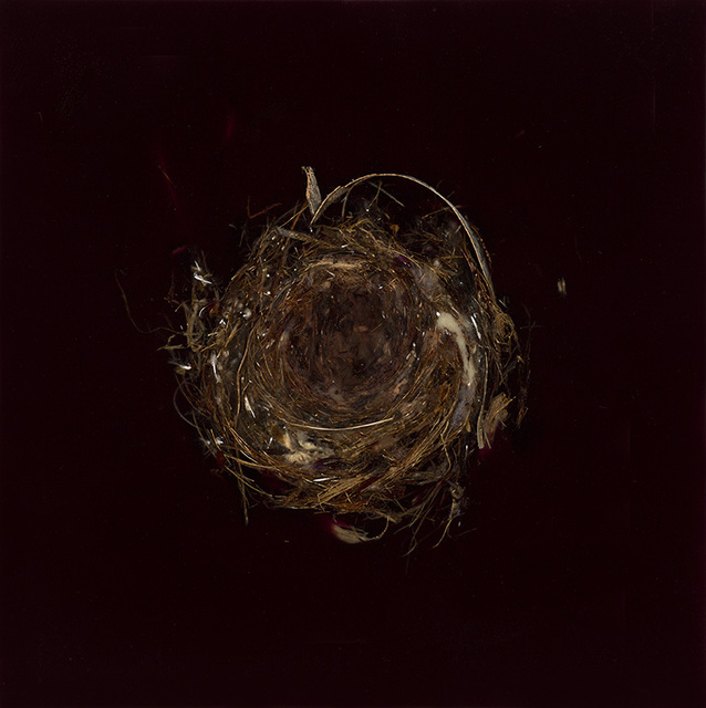, 'Knot 317,' 2017, Dolby Chadwick Gallery