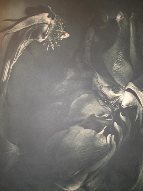 , 'Rose 1989,' 2001, David Krut Projects