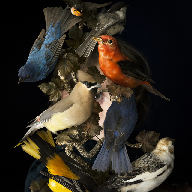 , 'Birds of New England,' 2017, Robert Klein Gallery
