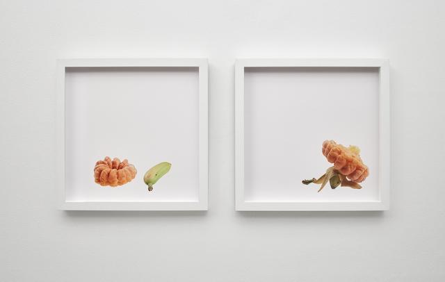 , 'cruller and plantain, plantain satisfies crueller,' 2015, Klowden Mann