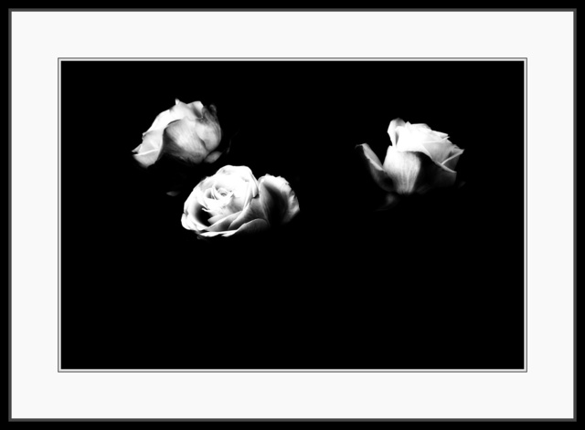 , 'Flowers #7 (Rising) ,' 1998, The Art of Wild Gallery