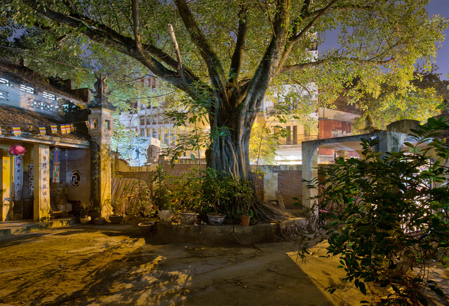 , 'Hanoi 18h6h 53 - Tan Khai Temple Tree Inside,' 2014, Art Vietnam Gallery