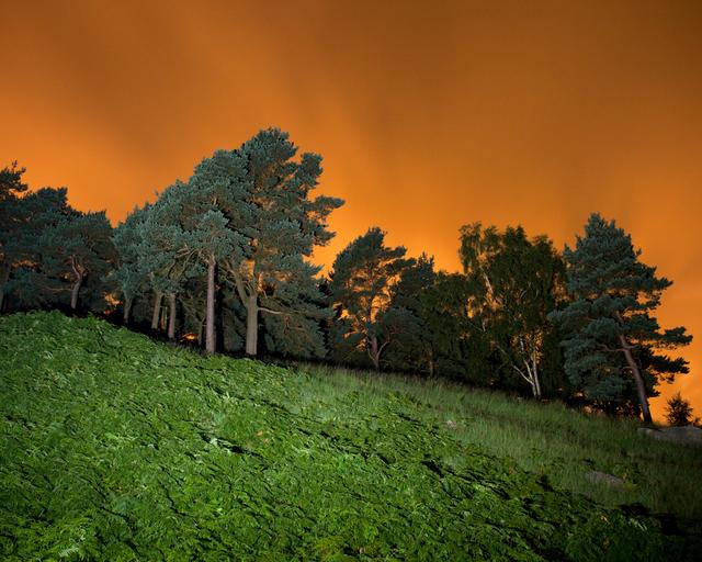 , 'Chew Piece Plantation, Saddleworth Moor,' 2016, ElliottHalls