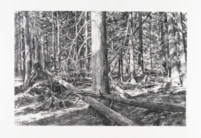 Michael Kareken, 'Lopez Island Woods', 2018, Highpoint Editions