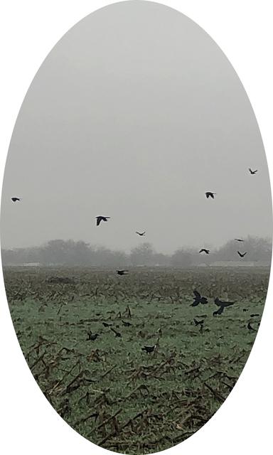 , 'A Cloister of Blackbirds,' 2020, Foto Relevance