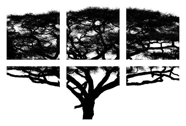 , 'Umbrella Tree—Photo-Assemblage,' 2014, Cross Mackenzie Gallery