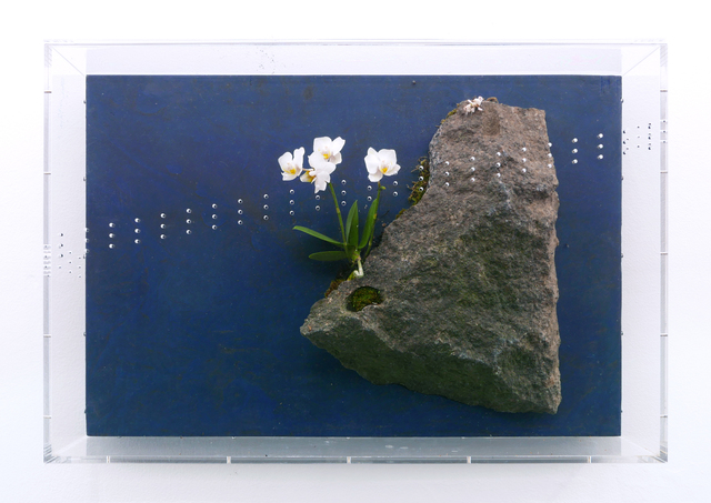 , 'Eco Square (When we are observing them, who are observing us?),' 2015, Marie Kirkegaard Gallery