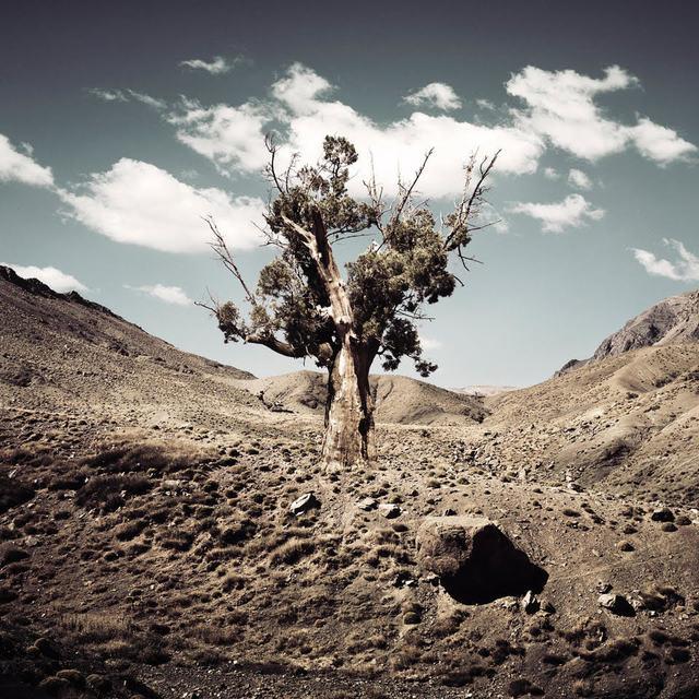 Bernhard Quade, 'Morocco Monument Tree', 2011, Photography, Chromogenic Print, CHROMA GALLERY