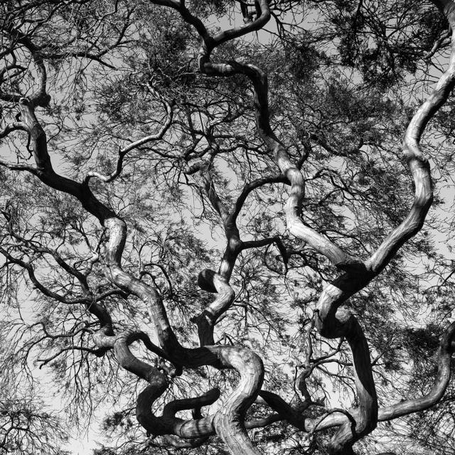 , 'Organic Lines 1,' 2011, Dedee Shattuck Gallery