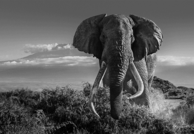 David Yarrow, 'Africa II', 2018, Holden Luntz Gallery