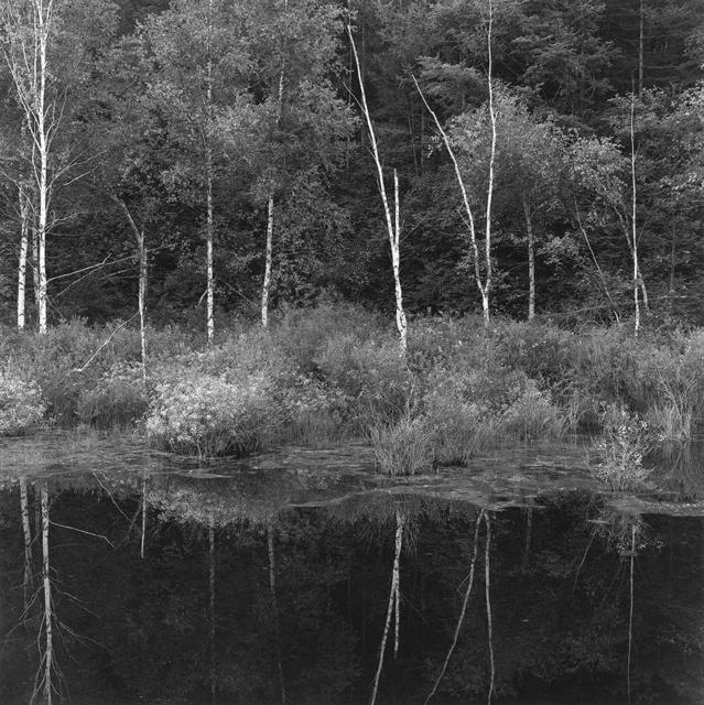 , '桦树和倒影 Birches and the Reflection,' 2017, C14 Gallery
