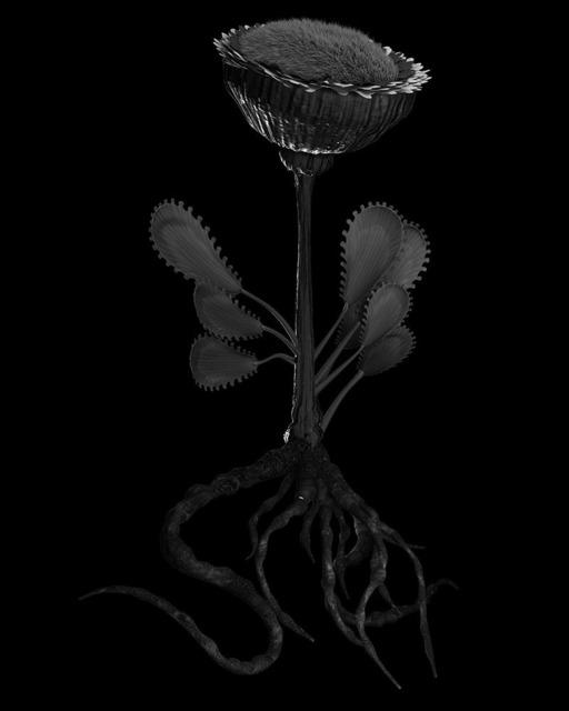 , 'Voynich Botanical Studies, Specimen 50r JARO,' 2013, Thomas Solomon Gallery