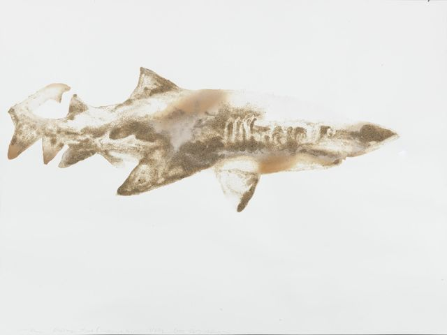 , 'Sand Tiger Shark Carcharias taurus (Coney Island, Brooklyn),' 2015, Salon 94