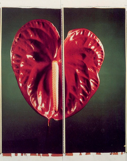 , 'Anthurium,' 1987, Parrish Art Museum