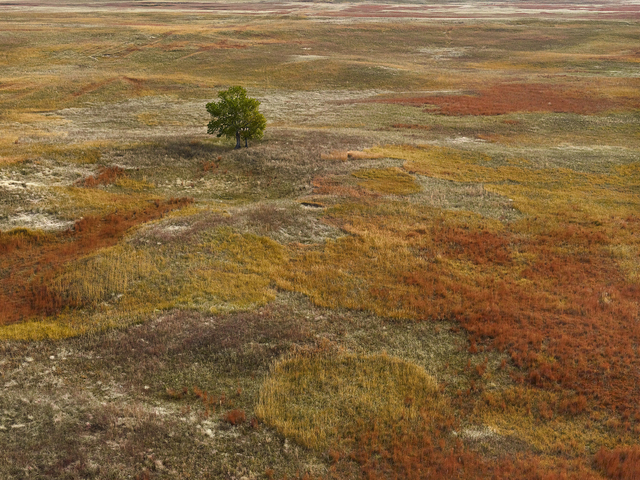, 'Autumn Grasses, Sheridan County, Nebraska,' 2013, Kopeikin Gallery