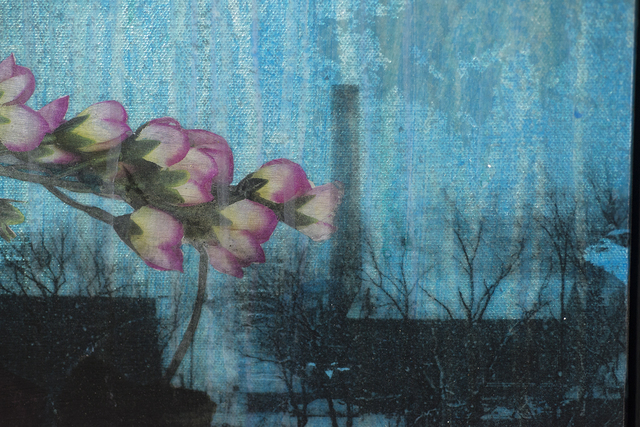 Tracy Silva Barbosa, 'Winter Morning', 2015, Painting, Transfer and acrylic on canvas, DETOUR Gallery