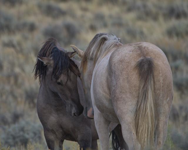 , 'Sand Wash Wild Stallion,' 2016, Bitfactory Gallery
