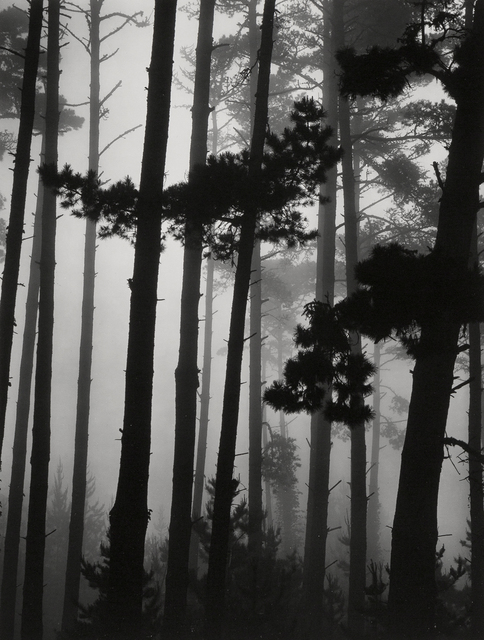 Brett Weston, 'Pines in Fog', 1962, Holden Luntz Gallery