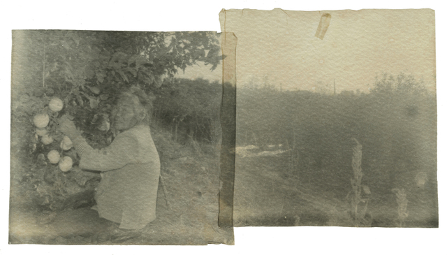 , 'Grandma Liu Picking Apples,' 2013, Blindspot Gallery