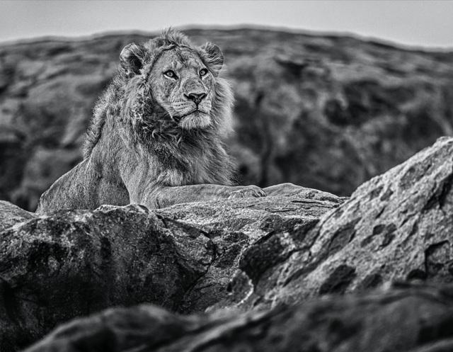 David Yarrow, 'Serengeti', 2019, Maddox Gallery