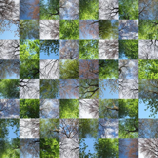 , 'Leafing Out,' 2015, Susan Eley Fine Art