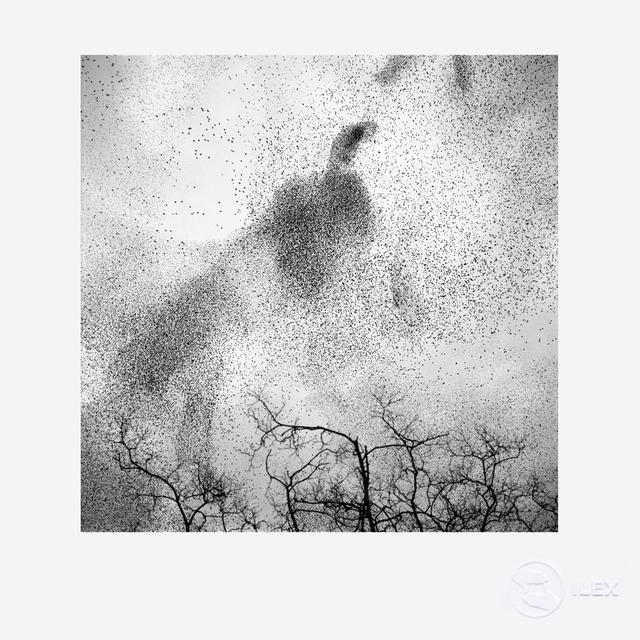 , 'Starlings #2,' 2012, ILEX Gallery