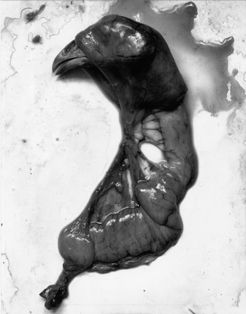 , 'Chicken,' 1939, Etherton Gallery