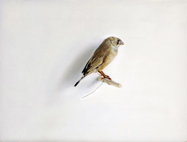 , 'Bird,' 2017, Purdy Hicks Gallery